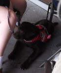 dog under a table