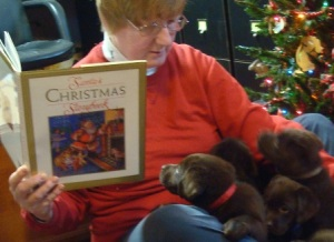 person reading to puppies