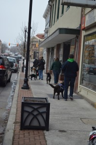 A group of service dogs walking down a town street
