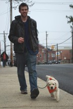 Lab puppy and man Turning street Corner