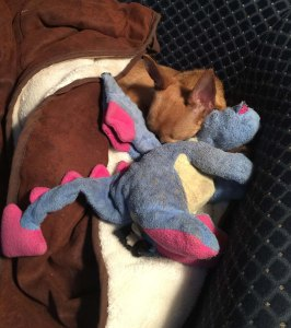 small dog sleeping with a toy dragon