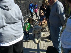 service dog learning to be still with kids