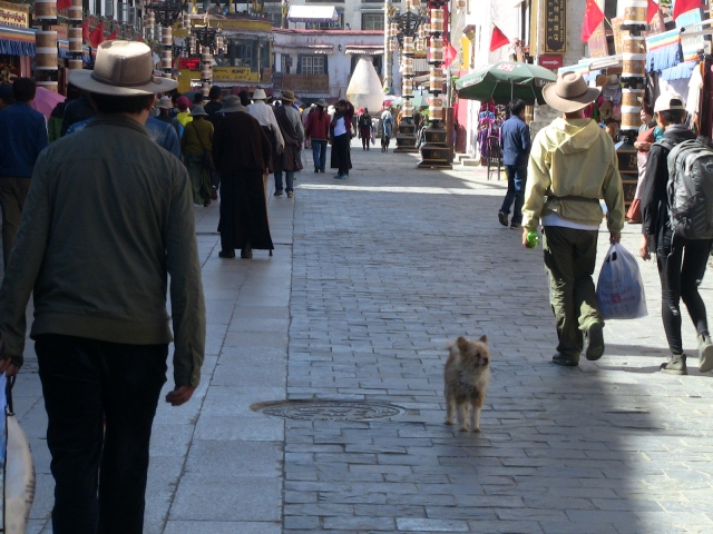 China_2016_terrier in bazaar.JPG