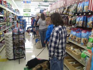 a group of service dogs prating manners in a store
