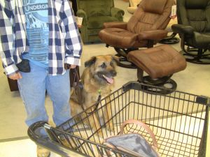 brown dog sitting next to shopping cart
